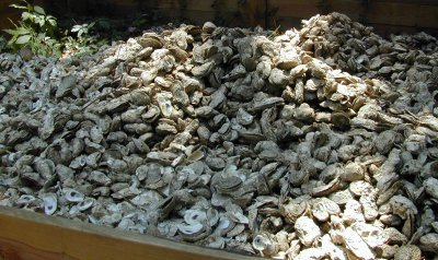 Photo of recycled oyster shells